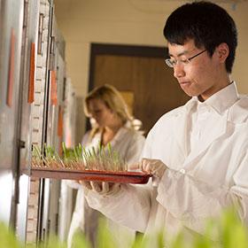 seedlings research